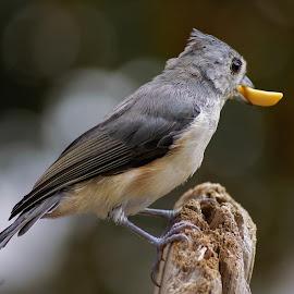 by Thomas Murphy - Animals Birds