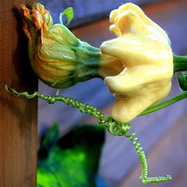 by Radita Watkinson - Nature Up Close Gardens & Produce