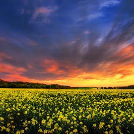 The Luminous Landscape pt.VIII. by Zsolt Zsigmond - Landscapes Prairies, Meadows & Fields ( clouds, rapeseed, sky, canola, sunset, scenery, landscape, spring,  )