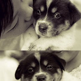 From Bashful to Happy by Joe Bowers - Animals - Dogs Puppies ( happy, puppy, cute, smile, mutt )