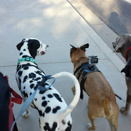 The Gang by Eric Miramontes - Novices Only Pets ( dogs, doggies, walk )