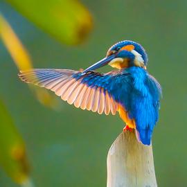 Yes its You.... by Chandra Mouli Roy Chowdhury - Animals Birds