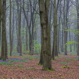 Micheldever Wood by Mike Maxfield - Landscapes Forests