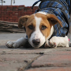 DOG by Tushar Kumar - Animals - Dogs Portraits