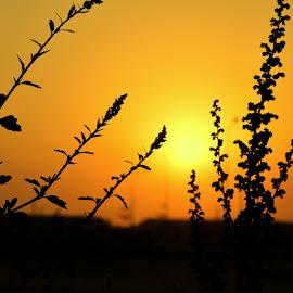 by Sana Naeem - Nature Up Close Leaves & Grasses