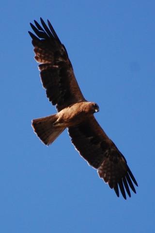 Birdwatch Alpujarras