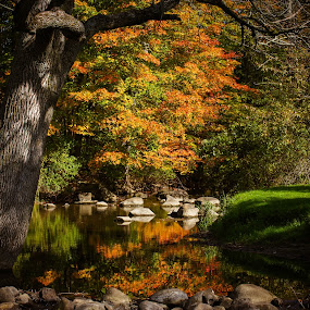 Reflected back by Christine Weaver-Cimala - Landscapes Waterscapes ( canon, water, stream, reflection, park, maple, michigan, nature, tree, color, fall, rocks, river )