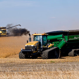 Bean Harvest by Robert Remacle - Transportation Other