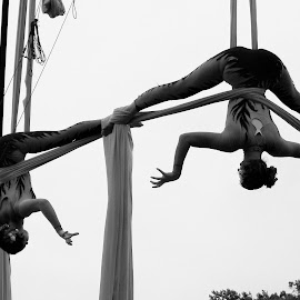 Ariel Acrobats Renaissance Fair 2014 by Monroe Phillips - News & Events Sports