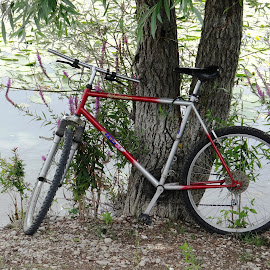 bike by the lake by Dubravka Penzić - Transportation Bicycles