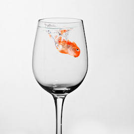 Something fishy? by Eitel Bock - Artistic Objects Glass ( water, fish, drink, glass, goldfish )