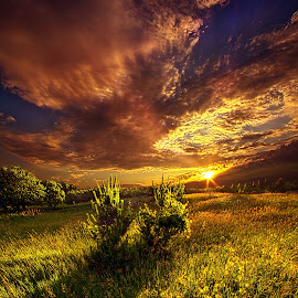 Two Trees by Phil Koch - Landscapes Prairies, Meadows & Fields ( vertical, photograph, farmland, yellow, leaves, love, sky, tree, nature, autumn, orange, twilight, agriculture, horizon, portrait, environment, dawn, national geographic, serene, trees, floral, inspirational, wisconsin, natural light, phil koch, spring, sun, photography, farm, horizons, inspired, office, clouds, park, green, scenic, morning, shadows, farming, field, red, blue, sunset, fall, peace, meadow, summer, sunrise, earth, landscapes )