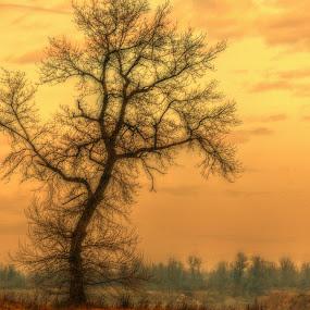 by Dunja Dretvić - Nature Up Close Trees & Bushes