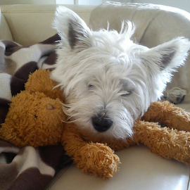 Teddy with teddy by Calvin Waterman - Animals - Dogs Playing