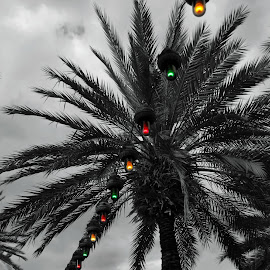 colors by Pamela McPherson - Artistic Objects Other Objects ( lights, palm tree, vacation, color, florida )
