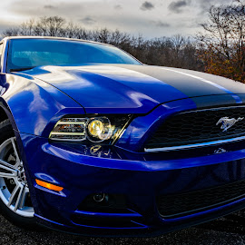 2014 Mustang Three Quarter View by Randy Scherkenbach - Transportation Automobiles ( mustang, wisconsin, november, waukesha, muscle car, 2014, mustang coupe, fox river park, 2014 ford mustang,  )