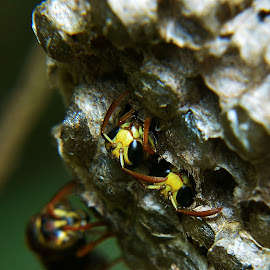 by Muhd RidzuanGom Ridzuan - Nature Up Close Hives & Nests