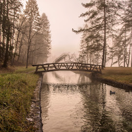 Bridge and Tree over the River by Aleš Krivec - Landscapes Prairies, Meadows & Fields ( calm, wild, reflection, beautiful, lake, forest, landscape, morning, spring, prairie, sun, rays, field, dawn, sky, tree, nature, fog, summer, sunrise, view, misty, river )