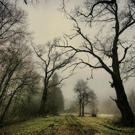 by Stjepan Valjak - Landscapes Forests