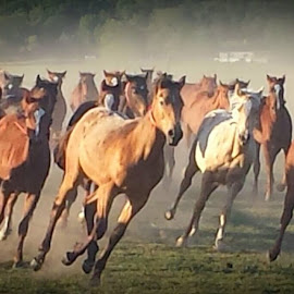 End of our first day at Jud Little Ranch watching the babies play:) Life is good!!!! by Kari Conner - Animals Horses