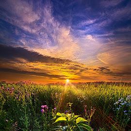 Secrets Revealed by Phil Koch - Landscapes Prairies, Meadows & Fields ( natural light, wisconsin, vertical, photograph, yellow, leaves, phil koch, spring, sun, photography, sky, tree, nature, autumn, horizons, flower, office, clouds, orange, park, green, twilight, agriculture, horizon, scenic, morning, portrait, shadows, wild flowers, field, dawn, red, blue, serene, sunset, peace, fall, meadow, summer, trees, earth, sunrise, landscapes, floral )