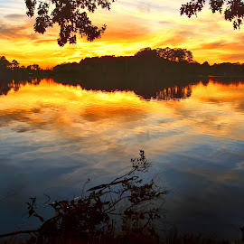 Golden Sunset on the Lake by James Gramm - Landscapes Sunsets & Sunrises ( water, colors, sunset, reflections, trees, lake, gold, light )
