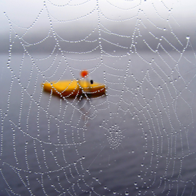Through the Web by Tony Huffaker - Nature Up Close Webs ( water, drops, lake, web, jewels, float,  )