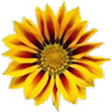 Yellow Flower Live Wallpaper icon