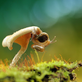 My lovely snail by R Kurniawan - Animals Other