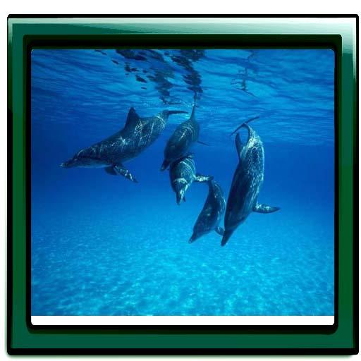 Underwater All Photo Gallery LOGO-APP點子