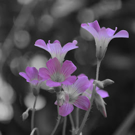Purple is life! by Kumud Lekhok - Novices Only Flowers & Plants