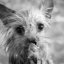 On the Beach by Paused In Time Photography - Animals - Dogs Puppies