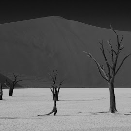 Deadvlei Calm by Ashley Crookes - Landscapes Deserts ( sossusvlei, sand, wilderness, desert, nature, tree, south africa, southern africa, landscape, namibia, deadvlei, black and white, b&w )
