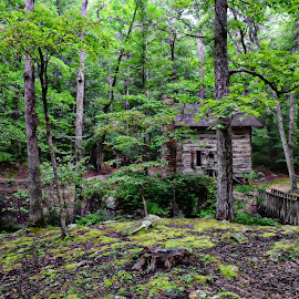 Little cabin in the woods by Debbie Stowe - Landscapes Travel