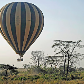 Balloon in Serengeti by Jaliya Rasaputra - Transportation Other ( balloon,  )
