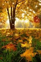 Screenshot of Falling Leaf Live Wallpaper
