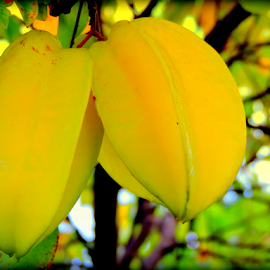 Starfruit by Elfie Back - Food & Drink Fruits & Vegetables ( carambola, tropical fruit, starfruit, fruit, yellow fruit,  )