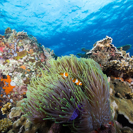 Below the Waves by Hafiz  Itam - Landscapes Underwater ( clear, blue, underwater, anemone, clown fish, seascape )
