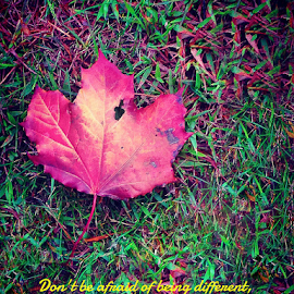 Perfectly Imperfect by Lawrence Ferreira - Typography Quotes & Sentences ( saying, autumn, changing, leaf, typography, photo )