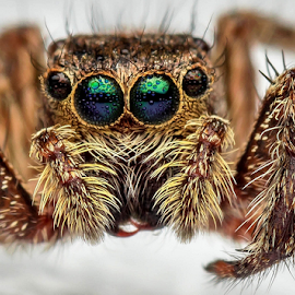 I don't mind this freezing cold morning! by Dave Lerio - Animals Insects & Spiders (  )