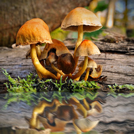 Beauties reflection by Marco Bertamé - Nature Up Close Mushrooms & Fungi ( water, reflection, autumn, green, fall, moss, brown, yellow, mushrooms )