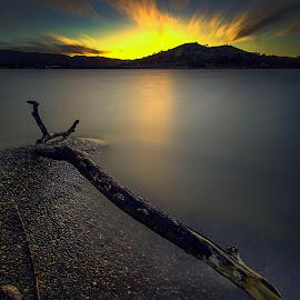 the wood by Surya Fajri - Landscapes Sunsets & Sunrises ( winter, deathwood, australia, tuggeranong, lake, act )