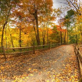 Milkman's Lane by Al Duke - Landscapes Forests ( fall, color, colorful, nature )