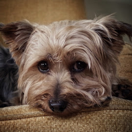 Patrick by Brian Knott - Animals - Dogs Portraits ( unhappy, pet, sad, dog, portrait,  )