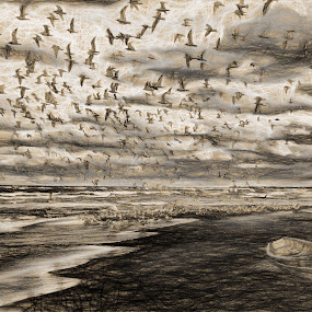 The birds by Dennis Granzow - Digital Art Places ( flock of birds, lake michigan, seascape, beach )
