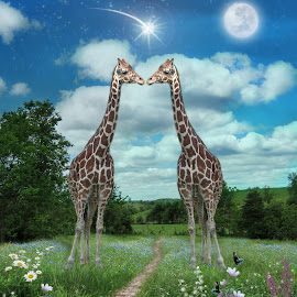 Star Kissed by Elizabeth Burton - Digital Art Animals ( hills, moon, shooting star, love, kiss, sky, butterflies, nature, giraffe, digital art, path, flowers, surreal, fiels, clouds, falling star, grass, green, star, blue, true love, meadow, trees, full moon, star kissed )