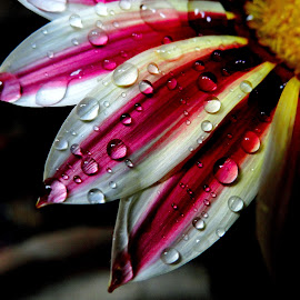 Beauty with drops by Asif Bora - Nature Up Close Natural Waterdrops