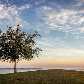 one tree by Lisa Lantrip - Landscapes Prairies, Meadows & Fields