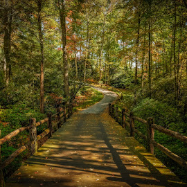 The Path by Dave Sansom - Landscapes Forests ( 'professional golf course photography', cashiers, 'private golf club', 'professional golf course photographer', 'golf course', 'north carolina', golf, 'mountaintop', 'dave sansom' )