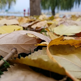 Summer's Sweet Decay by Mykel Cardinal-Janisch - Instagram & Mobile Android ( autumn, mobile photos, fall, beach, samsung, landscape, leaves )